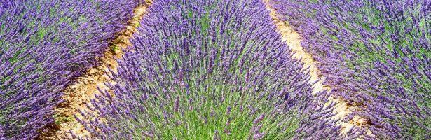 Tourrettes-Sur-Loup e Festa della Violetta