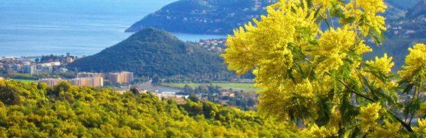 Mandelieu-La Napoule con Cannes e Grasse