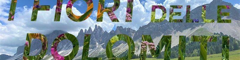 I fiori delle Dolomiti